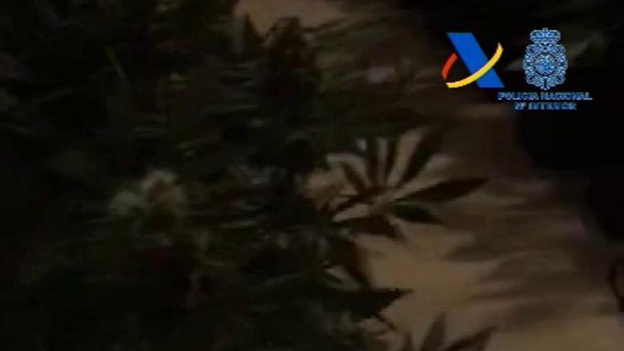 La plantación de marihuana que dejaba a un pueblo sin luz