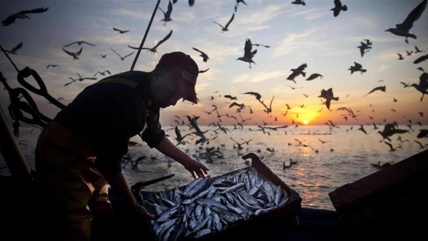 Europa pide «medidas urgentes» para reducir la pesca