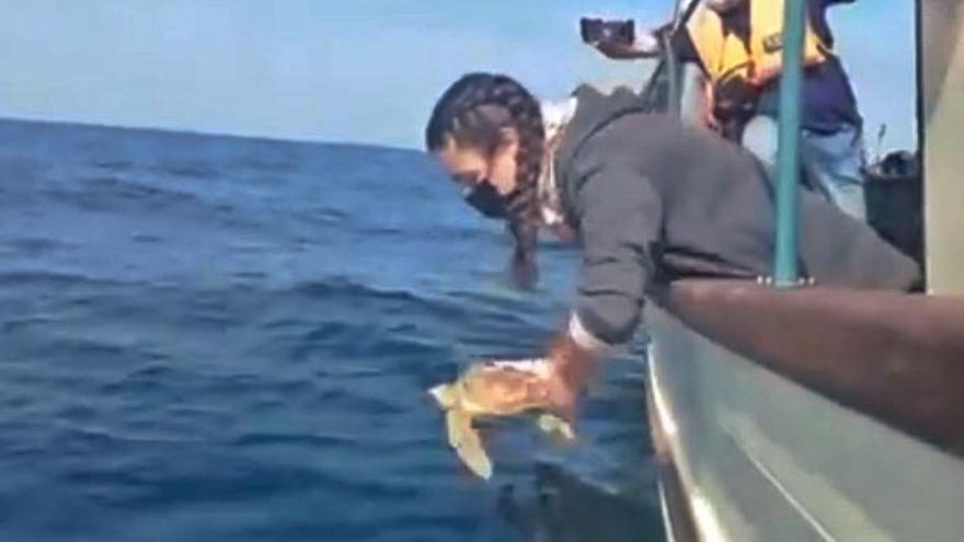 La tortuga Vilán regresa a casa