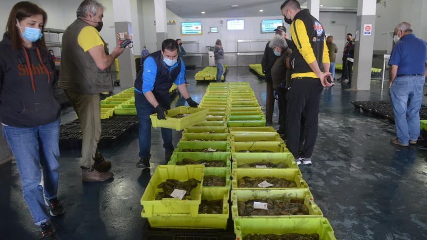 Arousa: 5.500 toneladas vendidas en lonja por 16 millones de euros, en tres meses