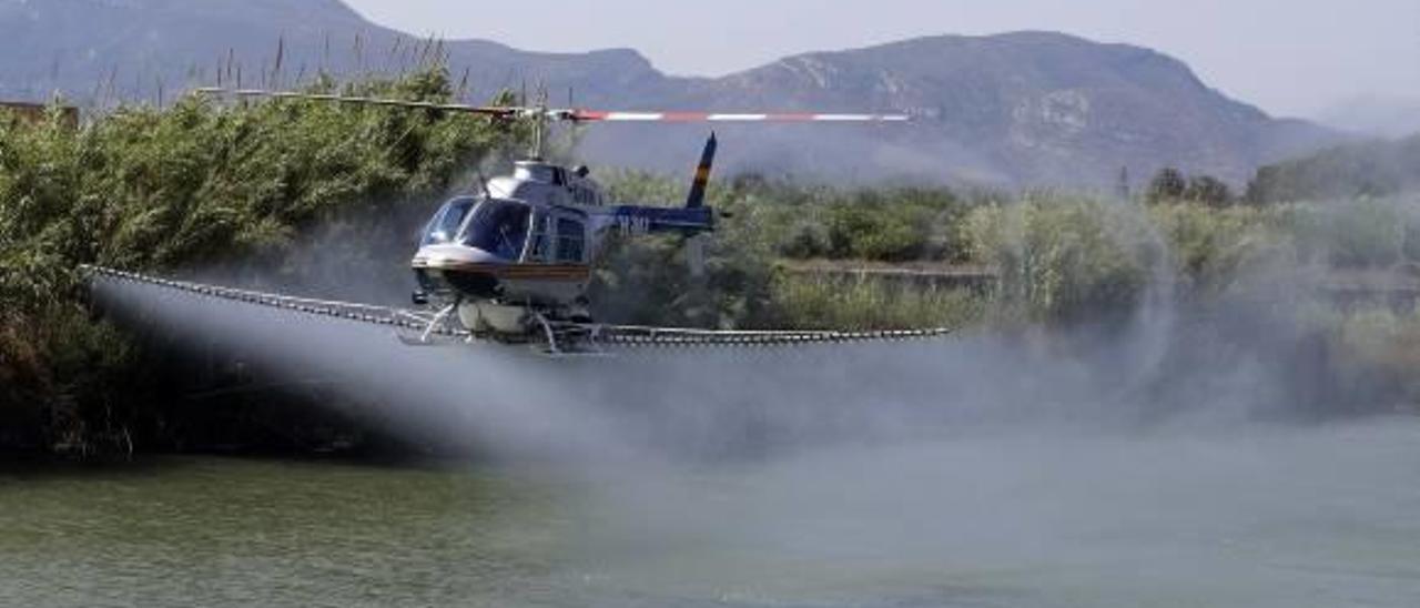 La plaga de mosquito tigre repunta y las próximas lluvias auguran un rebrote mayor