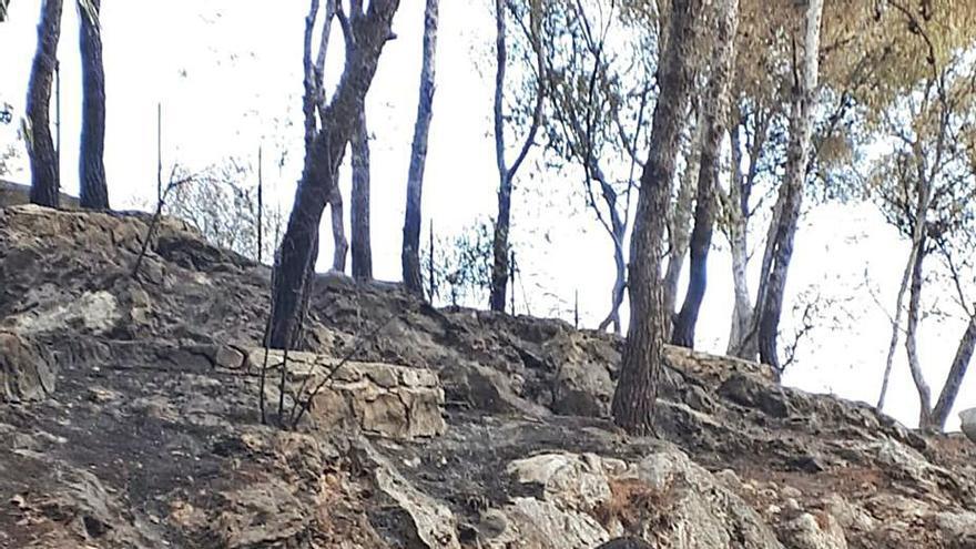 Oliva y Divalterra ya estudian repoblar la montaña quemada de Santa Anna