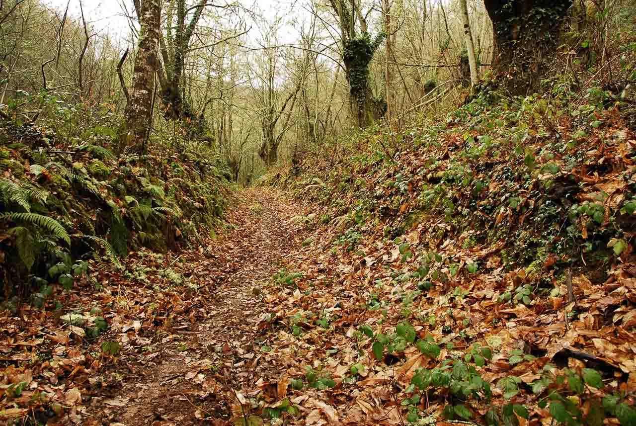 Bosque de Os Grobos