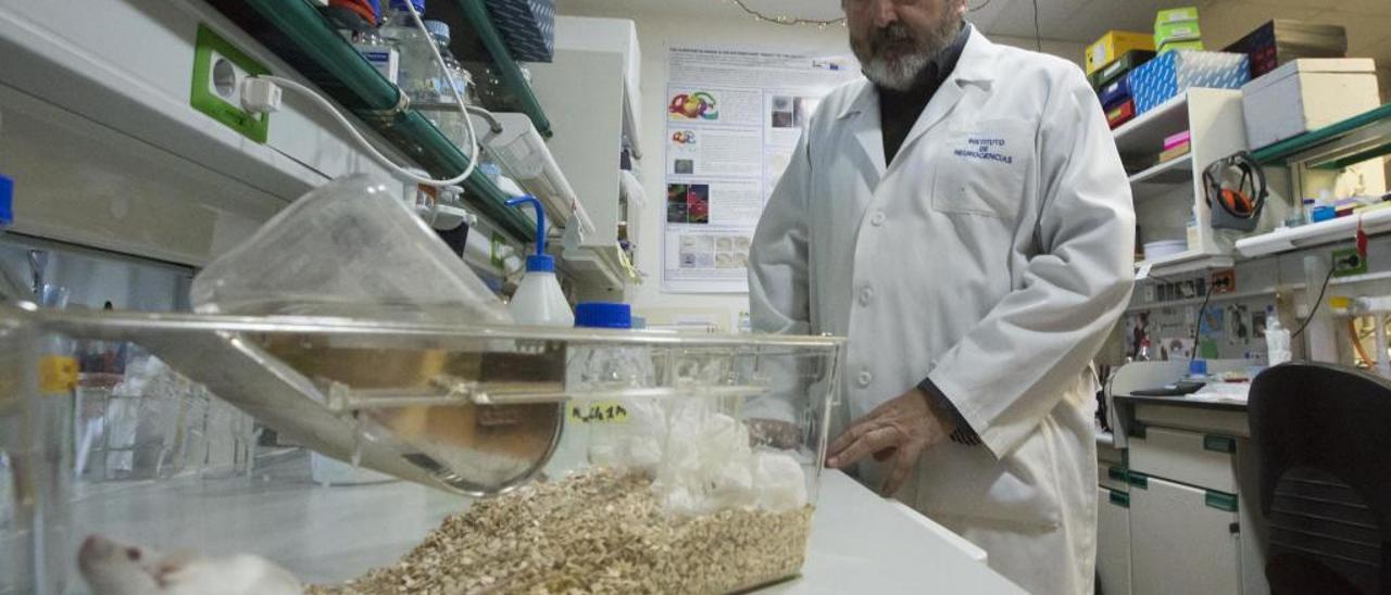 El director del Instituto de Neurociencias, Salvador Martínez, está al frente de este proyecto.