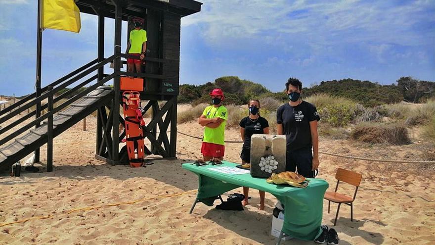 Sant Josep impulsa una campaña de concienciación sobre las tortugas marinas