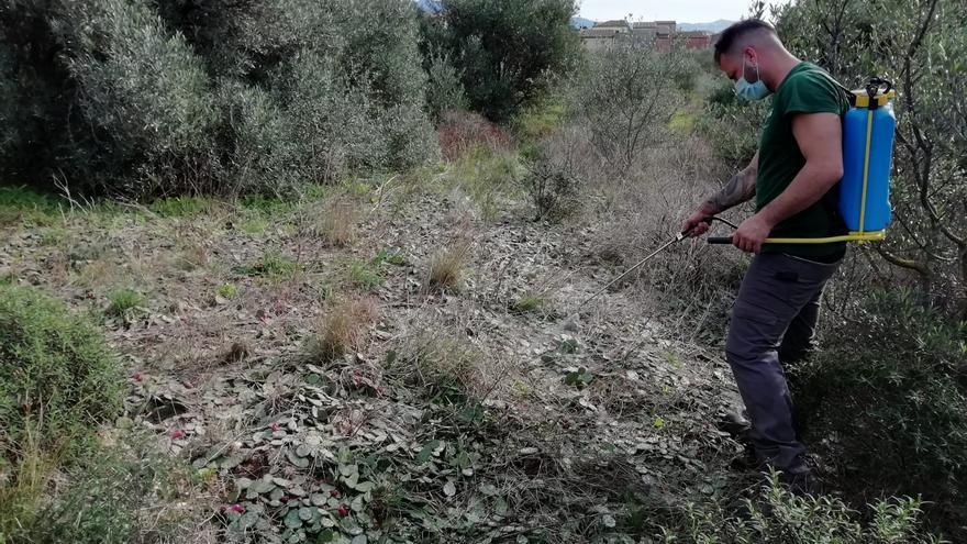 Pau entra a la segona fase per eliminar els cactus invasors