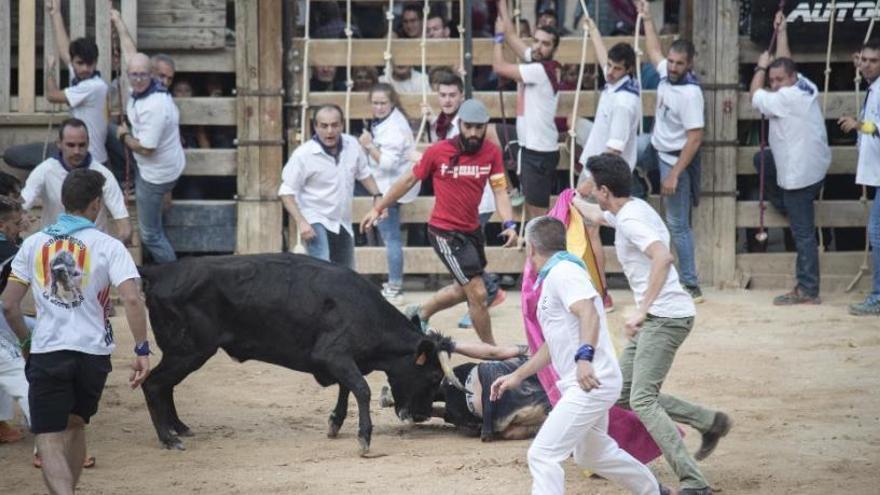 Cardona fa pinya a favor del corre de bou després que el Parlament n'hagi aprovat l'abolició