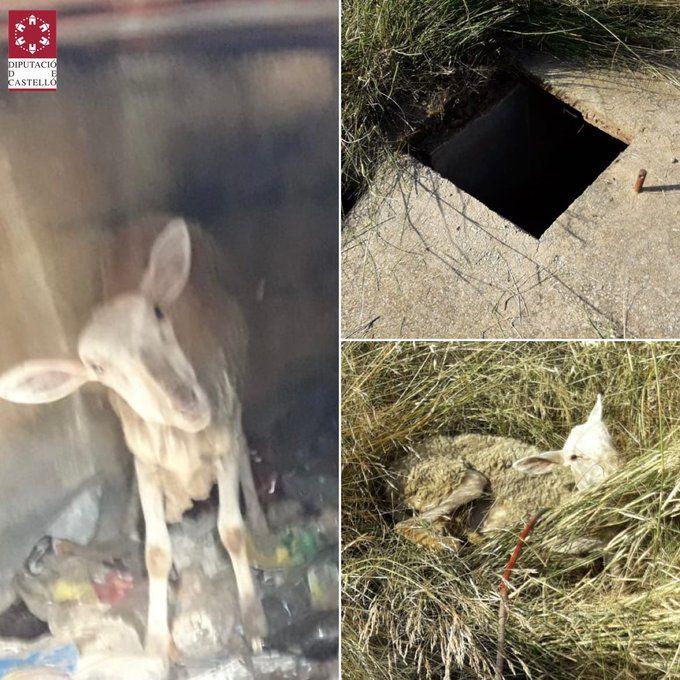Imágenes facilitadas por el SIAB  de lugar donde se había quedado atrapado el animal.