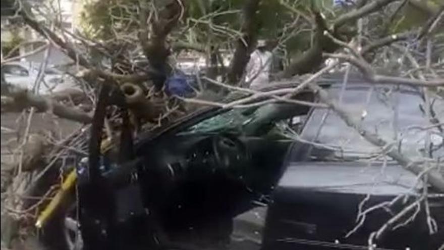 Caída de un árbol sobre un coche en las Moreras