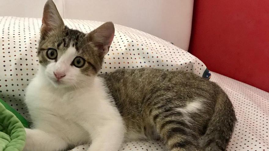 Lyam, el gato perdido que se refugió en una escuela