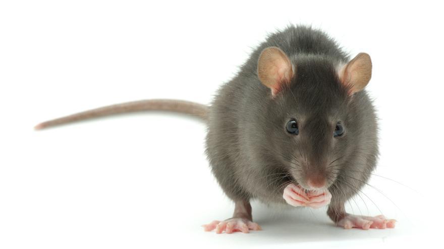Un técnico intenta reparar una lavadora y se encuentra dentro tres ratas