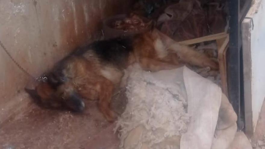 Detenido un joven en Lorca por abandonar a un perro, que ha muerto
