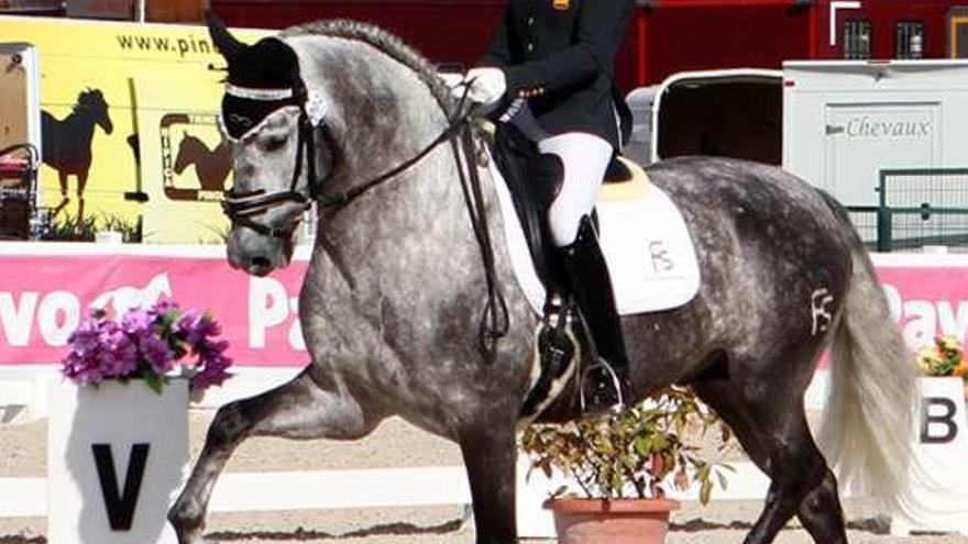 Abollo compite en el Mundial de Caballos Jóvenes