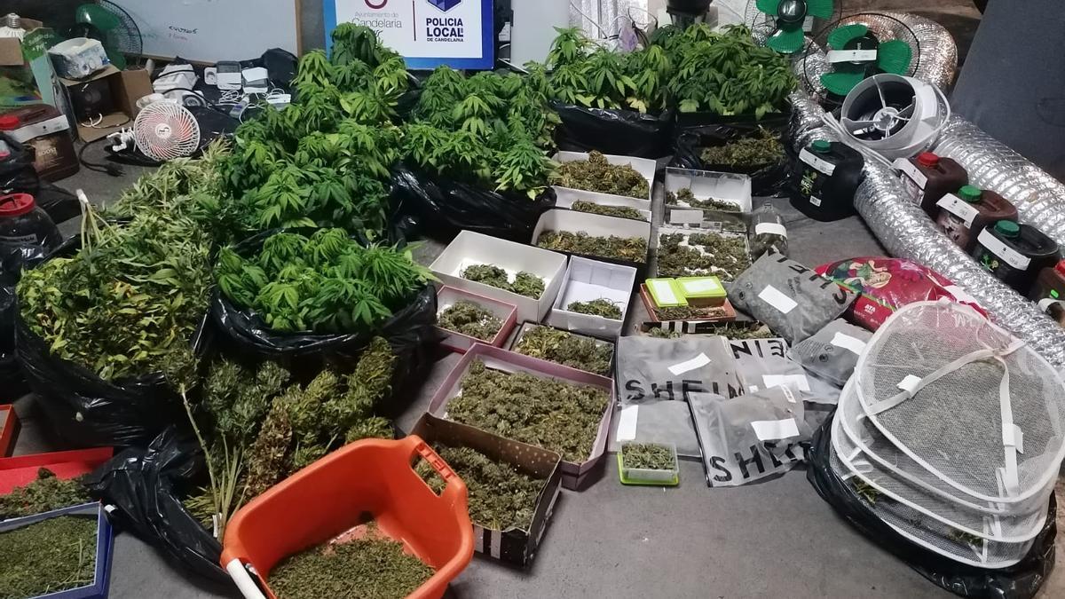 Marihuana y utensilios intervenidos en Candelaria.