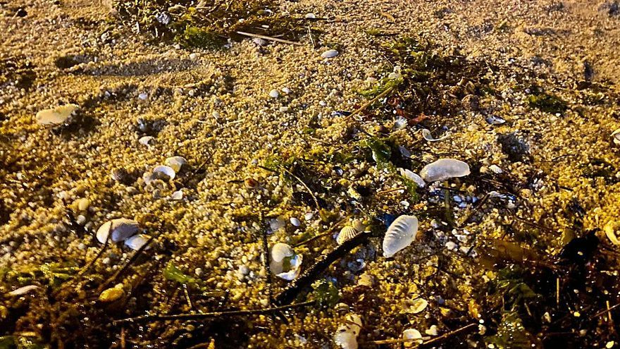 Retiran de la playa de Rodeira 110 carabelas portuguesas