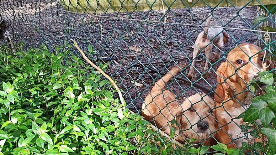 Los perros interrumpen las clases en Gondomar
