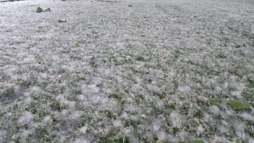 Fuerte aumento del nivel de polen de gramíneas, olivo y roble este fin de semana en Zamora