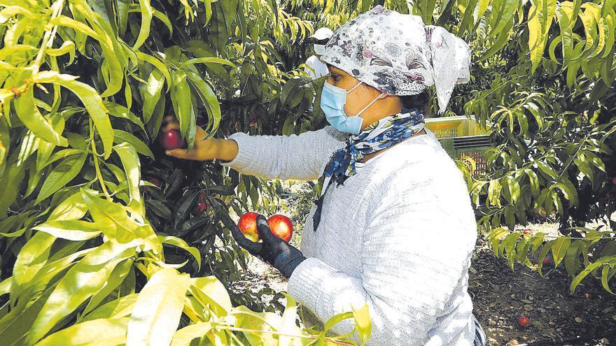 UAGA se queja de la presión y arbitrariedad de las inspecciones laborales a fruticultores