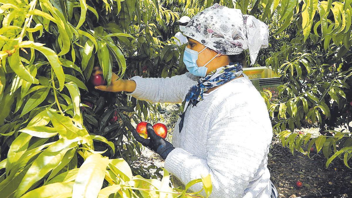 Una mujer recoge fruta en la comarca del Bajo Cinca durante la campaña del año pasado