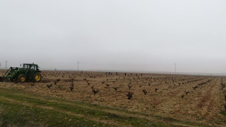 La DO Toro incorpora dos nuevas variedades de uva