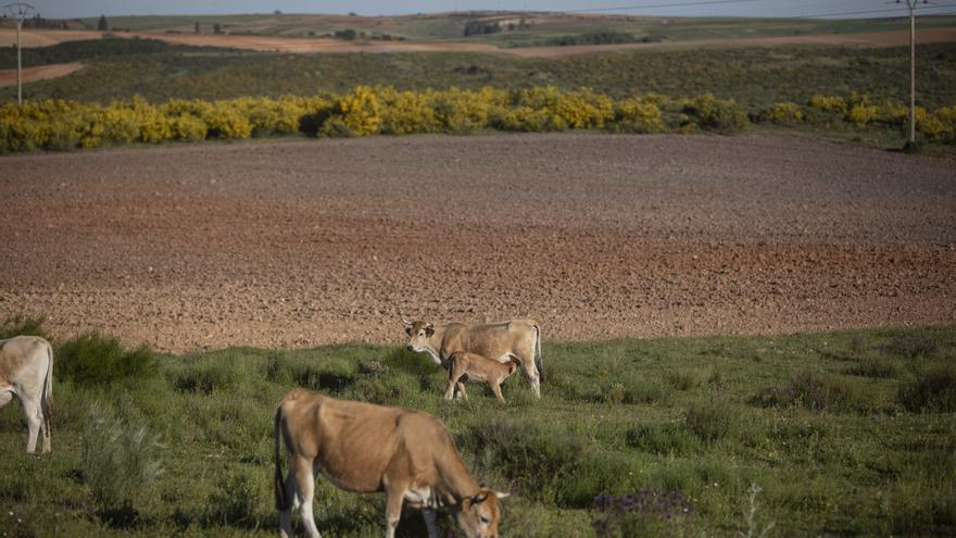 Almaraz arrienda 8 hectáreas de  suelos comunales para huerto solar