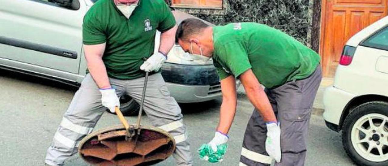 El calor y la sequía hacen aumentar los controles sobre plagas en la capital