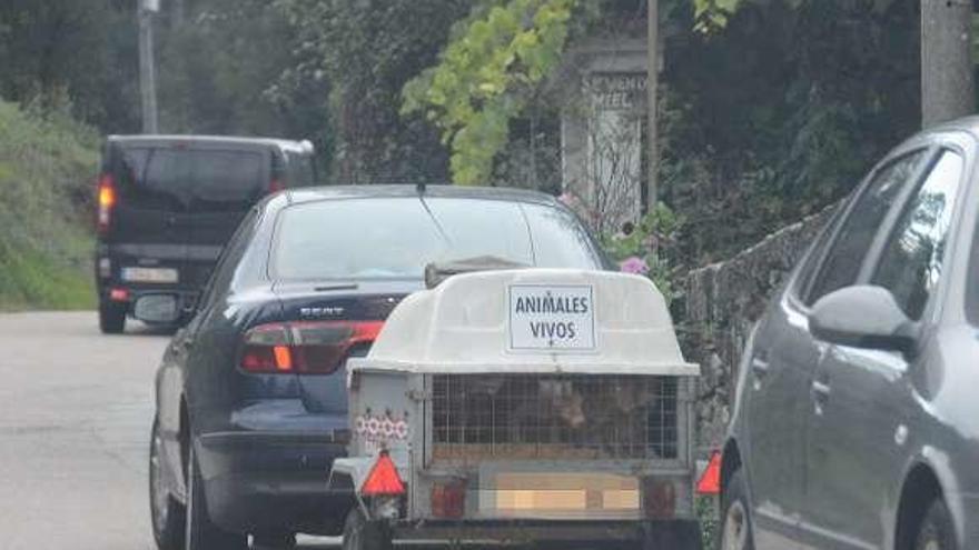 Los cazadores de Moaña completan su batida de zorros mientras protestan unos 200 animalistas