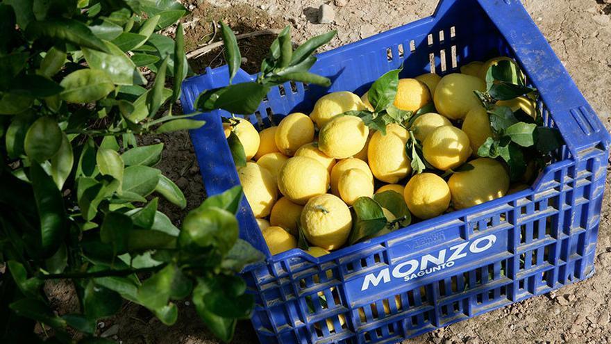 Polémica por una oferta de trabajo en el campo de Murcia: a un euro la caja
