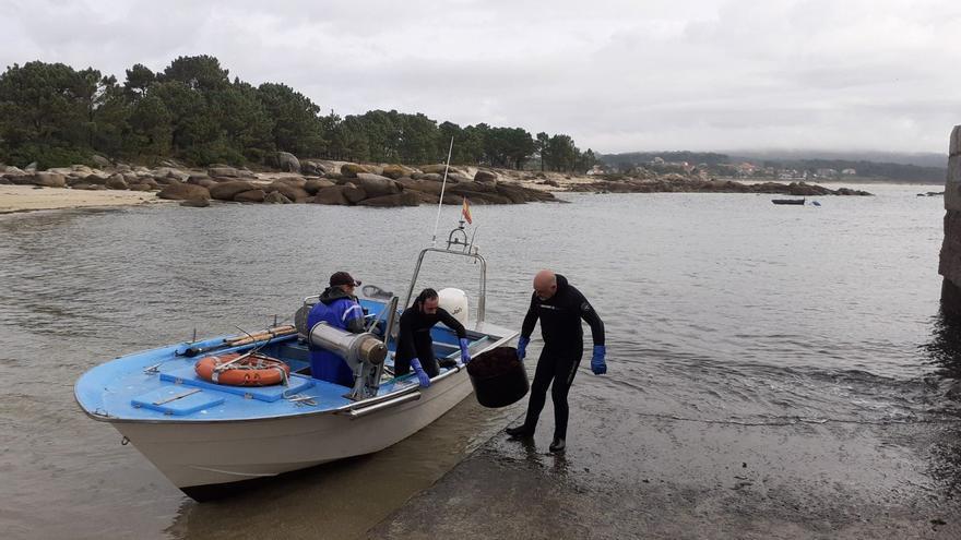 Esperanzador arranque de la campaña del erizo de mar en O Grove