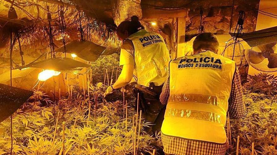 Girona és la desena província amb més casos de tràfic de drogues