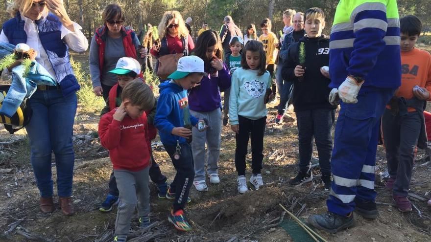 Los habitantes de Fuente Álamo se vuelcan con la plantación de pino carrasco