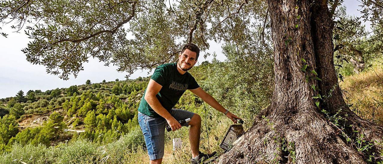 Los tres jóvenes emprendedores en los campos de olivos en la zona del Valle de Guadalest.   DAVID REVENGA