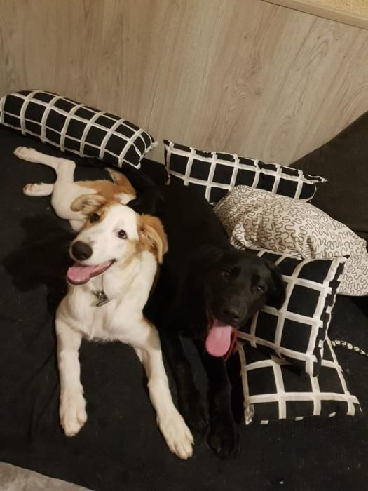 Dia Mundial del Perro