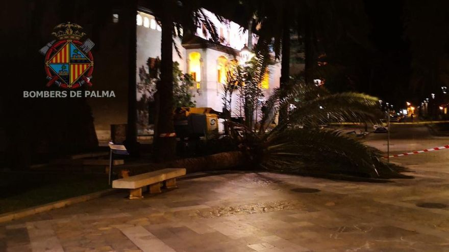 Sturmböen reißen sieben Palmen an Palmas Paseo Marítimo um