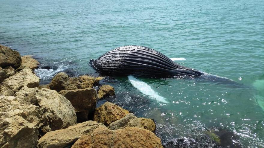 Nadie quiere la ballena de Gandia