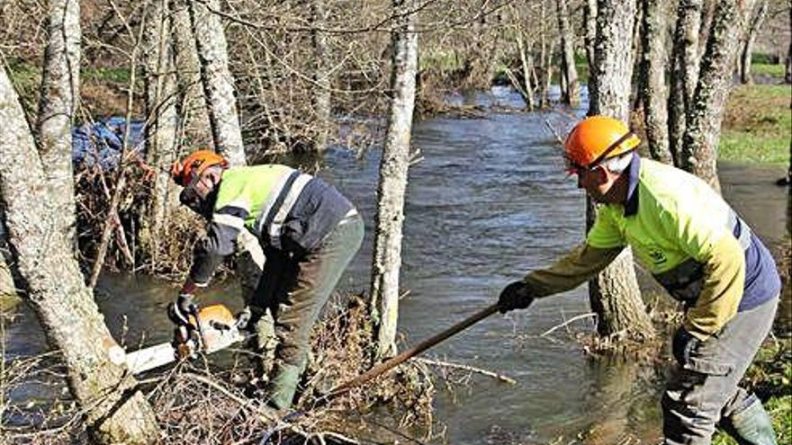 Trabajos de limpieza en el arbolado crecido en la cuenca del río Aliste
