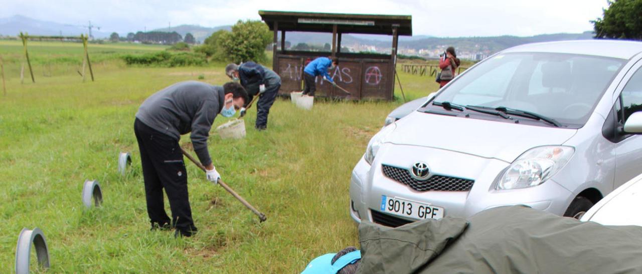 El voluntario Gustavo Pérez, ayer, retirando la planta.
