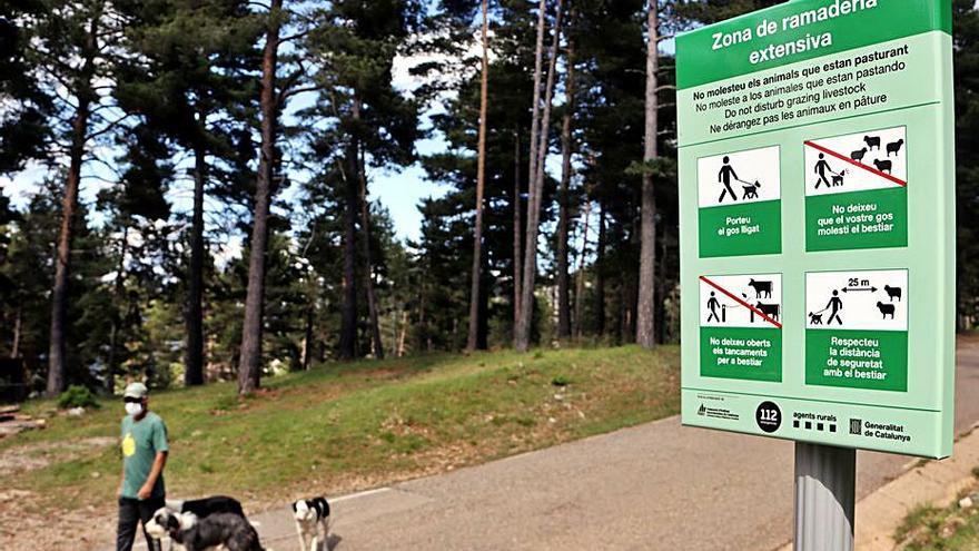 Inicien una campanya al Berguedà per evitar atacs de gossos deslligats a ramats