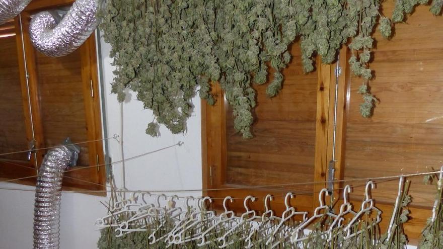 Detenen un home que tenia una plantació de marihuana a Moià