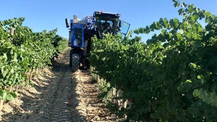 El vino aragonés exporta un 11,7% más en lo que va de año