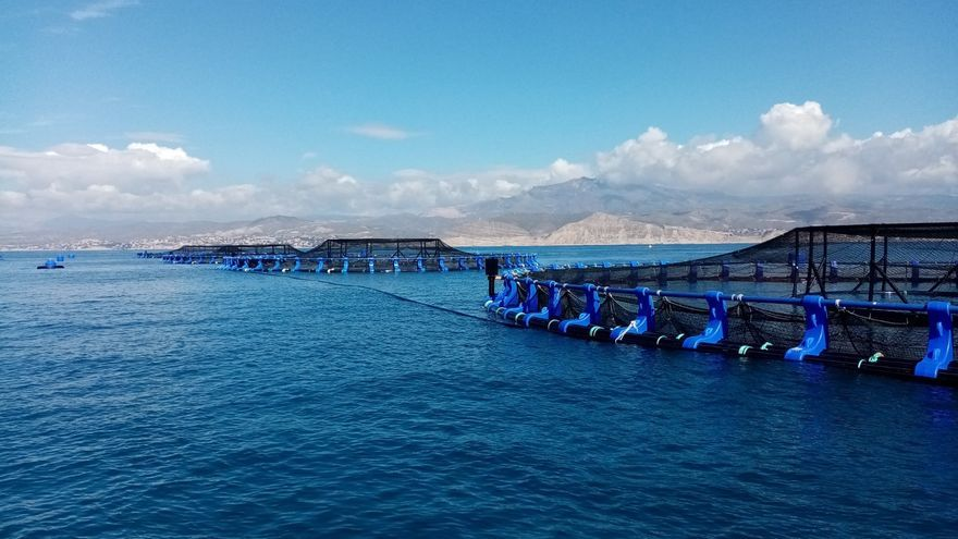 Avramar pone en marcha su granja marina de El Campello