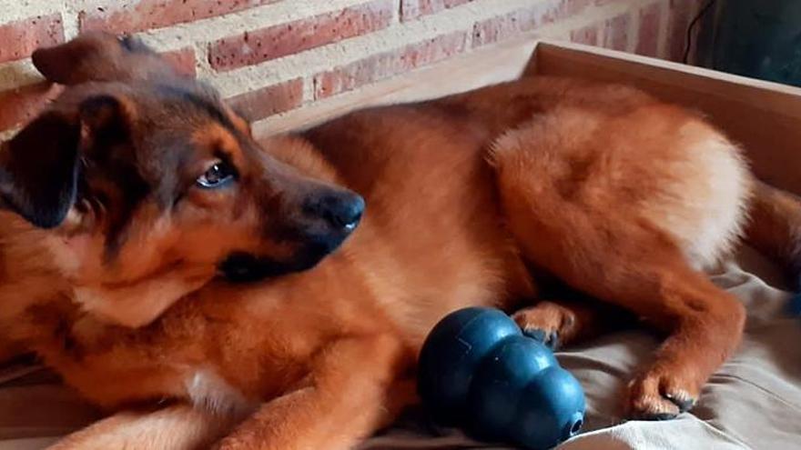 Seúl hará test de coronavirus a gatos y perros con síntomas