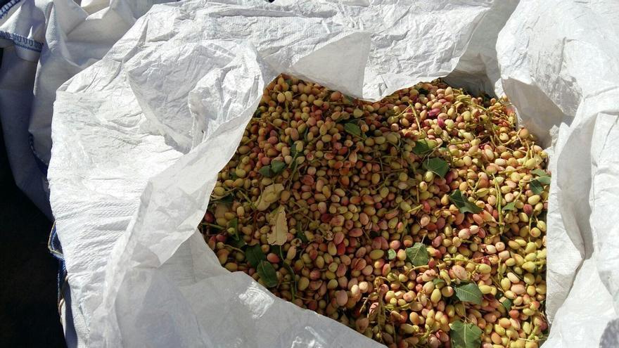 Aumenta la superficie sembrada de pistacheros en la zona norte de la provincia de Córdoba