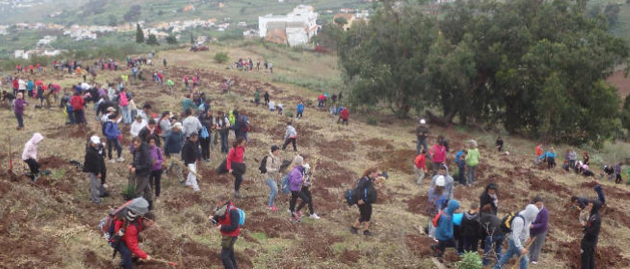 Un instante de la masiva asistencia a la reforestación, ayer, en Firgas.