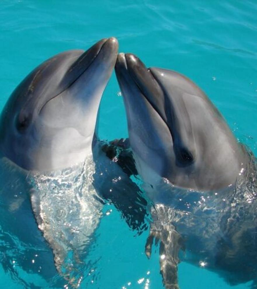 Los silbidos humanos nos ayudan a entender a los delfines