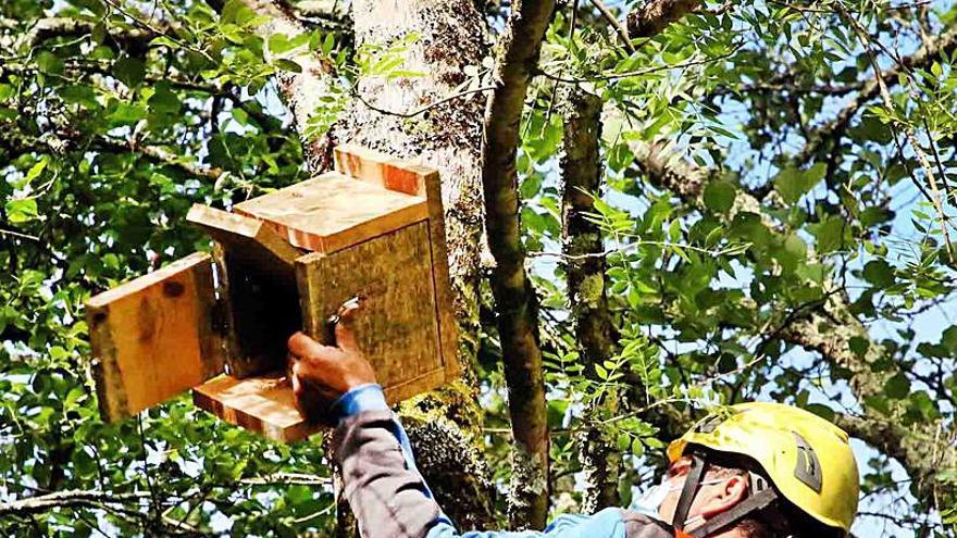 Murciélagos refugiados a orillas del Tea