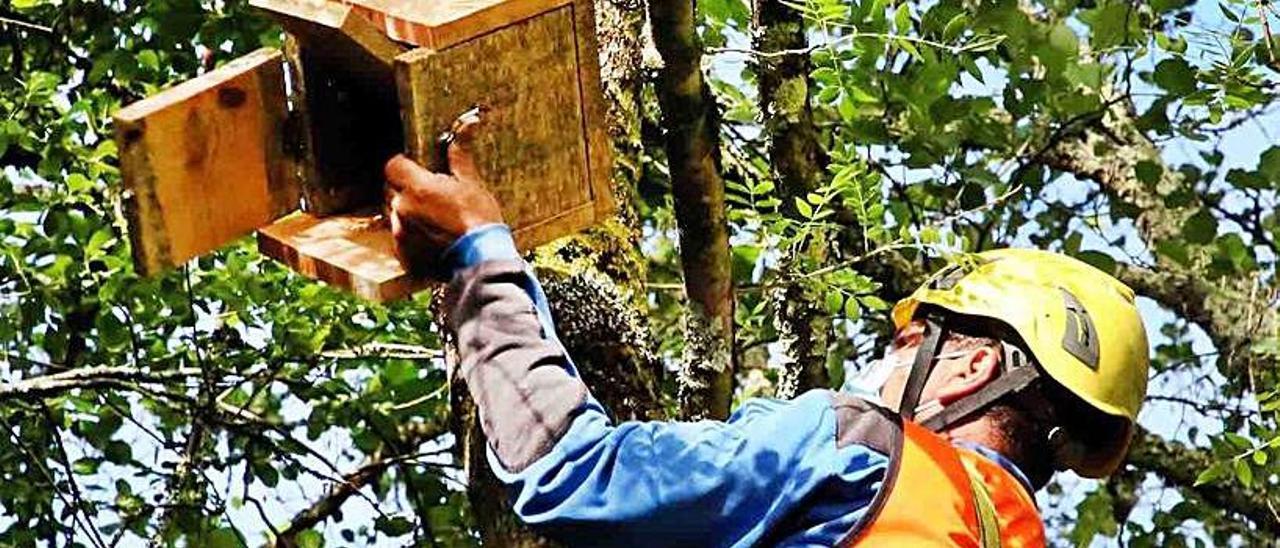 Un técnico colocando una caja-refugio para murciélagos.