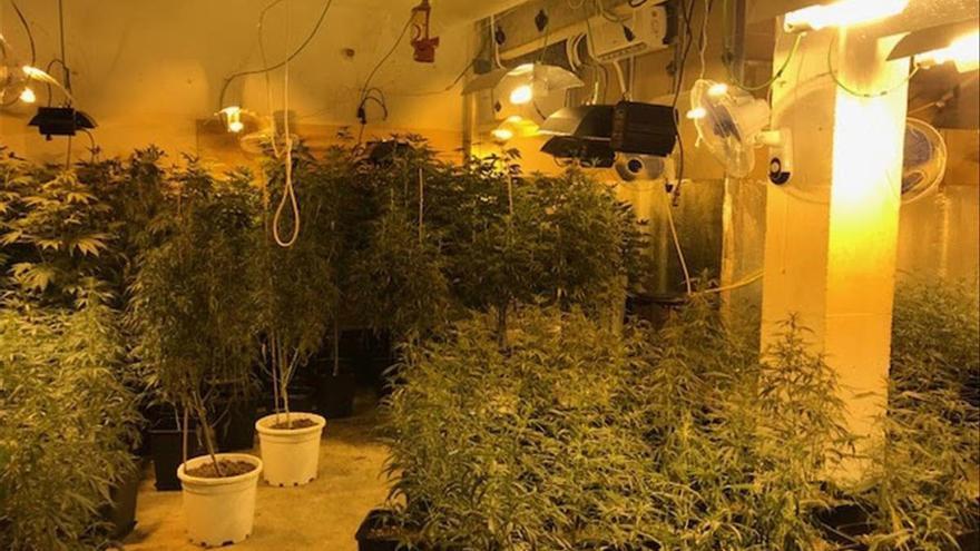 Operación de la Policía Nacional contra el tráfico de marihuana en Cataluña