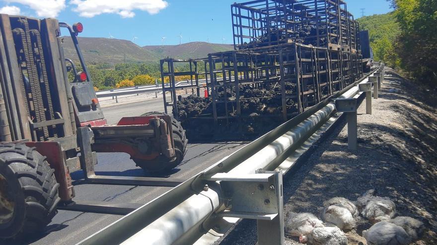 Miles de pollos calcinados en el accidente de Lubián, en la A-52
