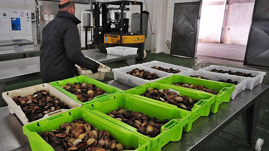 Sanidade prohíbe a los compradores limpiar pescado en el interior de la lonja de Cambados